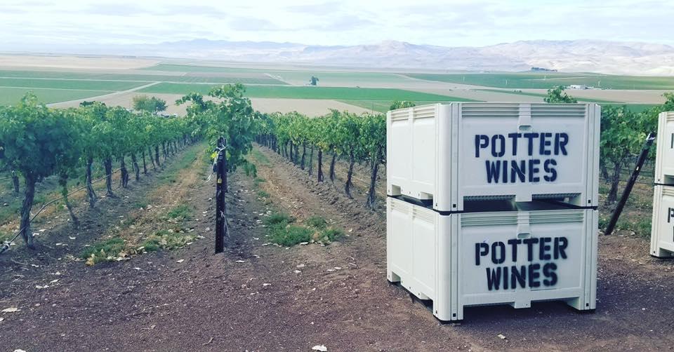 Potter Wines Grape Harvest