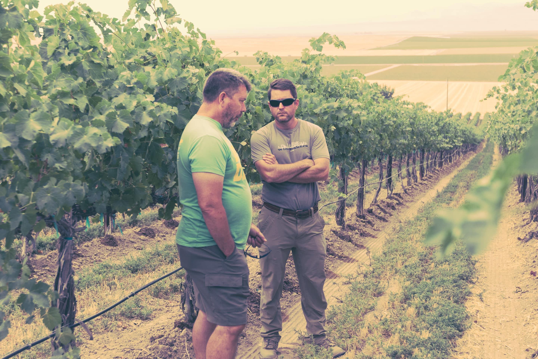 Visiting the Vineyard